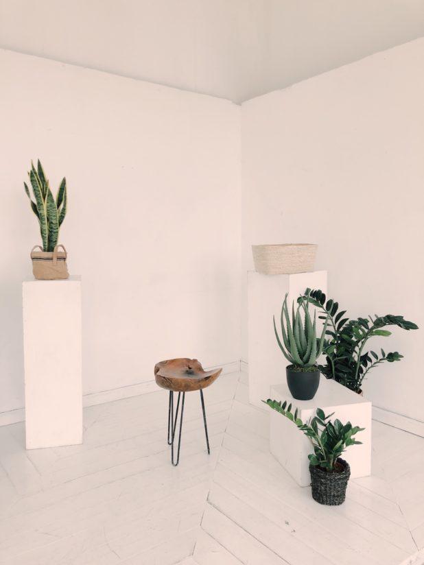 Zimmerpflanzen auf podesten