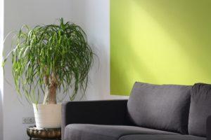 graue couch vor grüner wand mit pflanze